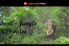Dosti - Jungle 2019 video