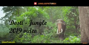 Dosti - Jungle 2019 video